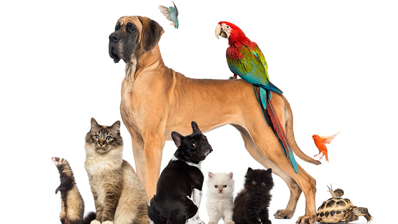 Internet Marketing for the Animal Health Industry