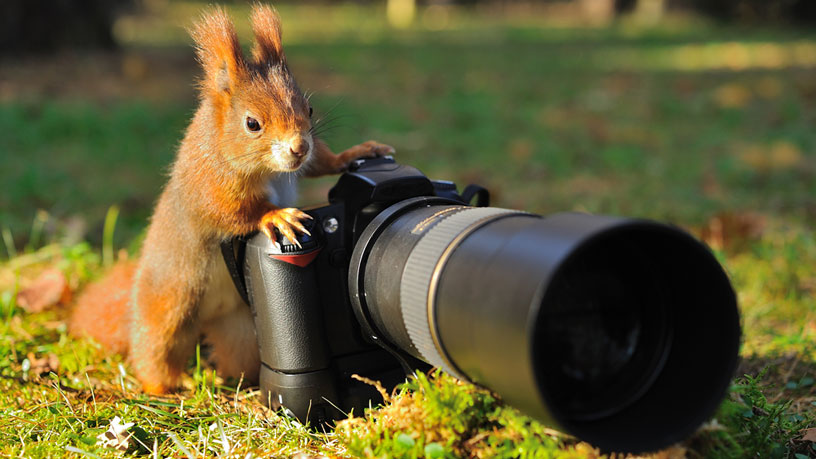 Internet Marketing for the Photography Industry